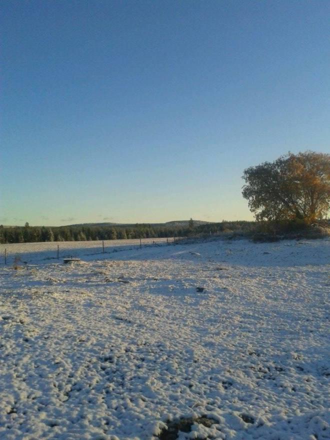 vinterlant