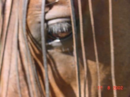 seke närbild 1 aug 2002