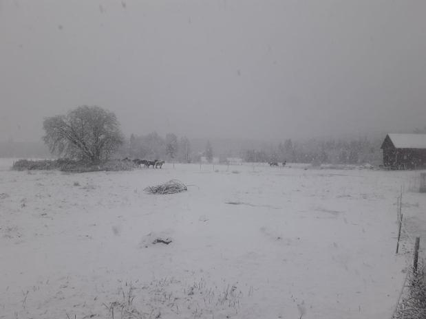 Snön är här!
