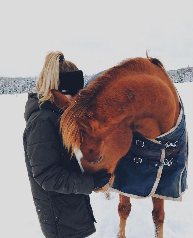 Ett fullblod tillridhäst