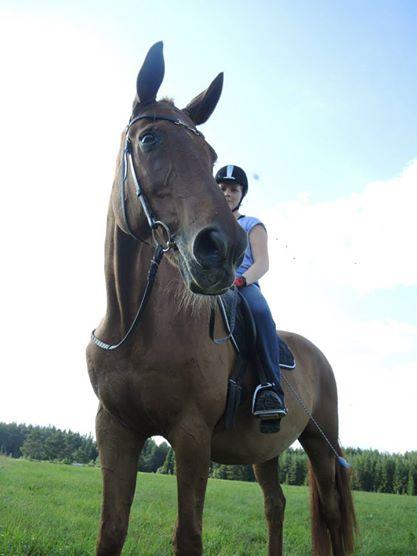 Ta hand om gamla hästar del2
