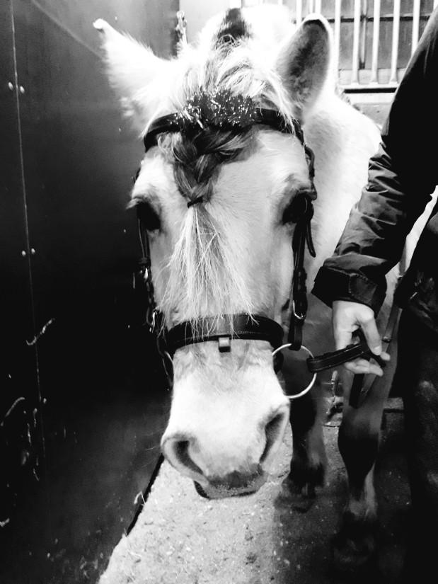 Tips: Lär aldrig hästen hur stark denär